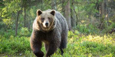Laney (39) von Bärenfamilie getötet und gefressen