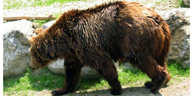 Passant in Rumänien von Bär getötet