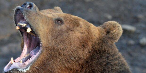 Bosnier tötet Bären nach Attacke mit Axt