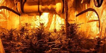 Wien-Meidling:: Cannabis-Gewächsanlage in Wohnung entdeckt