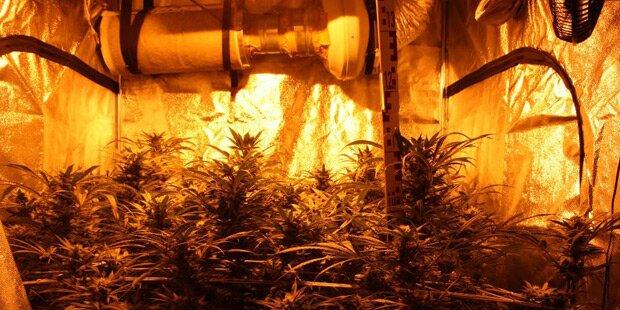 Cannabis-Gewächsanlage in Wohnung entdeckt
