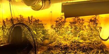 Geruch verriet Cannabis-Indoorplantage