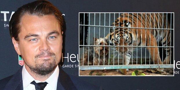 DiCaprio spendet drei Millionen Dollar an WWF