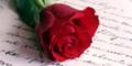 rose und brief