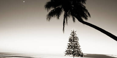 Christbaum Hawaii