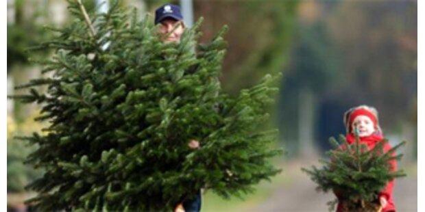 Heimische Christbäume sind am beliebtesten