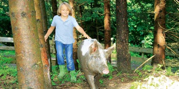 Bub (9) als Schweine-Retter