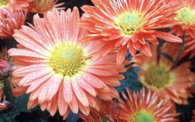 Herbstpflanzen brauchen große Kästen