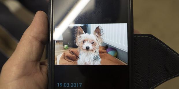 Gizmo Hund im Wäschetrockner Gratkorn