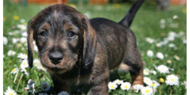 Welpentransport - 15 Hunde aus Tierklinik wohlauf