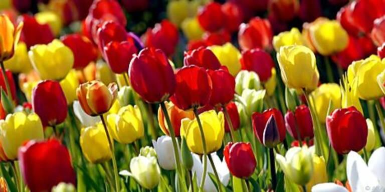 Damit die Blumen im Frühjahr blühen