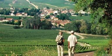 Die Landschaft ist von Weinbergen geprägt