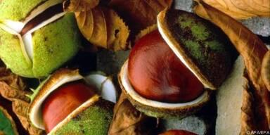 Die Samen der Pflanze haben eine heilende Wirkung