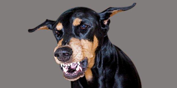 Wachdienst hetzte Hund auf Bursch
