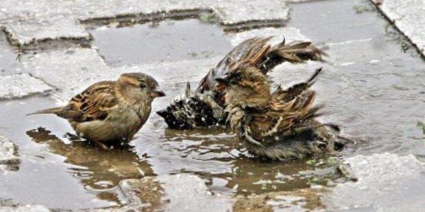 Überflutungen am Balkan