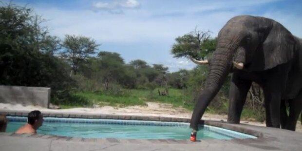 Schock: Ein Elefant crasht Pool-Party