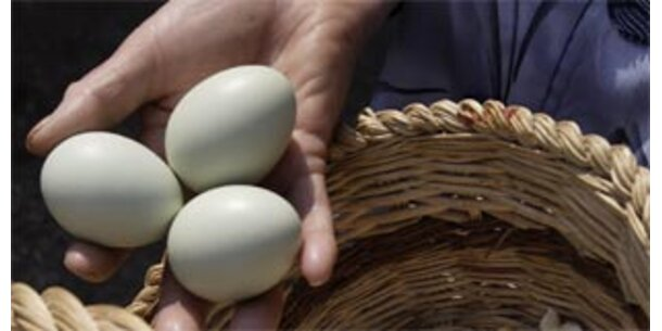 Eier auch für Allergiker verträglich
