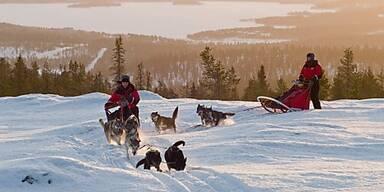 Eine kläffende Meute in der Stille Lapplands