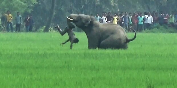 Elefant trampelte 15 Menschen zu Tode