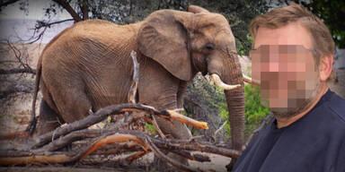 Von Elefant totgetrampelt: Austro-Tourist campte illegal