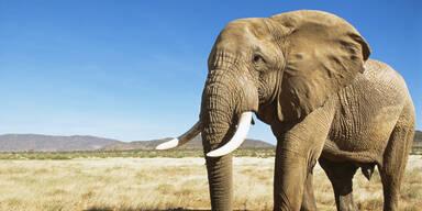 Wilderer auf der Flucht von Elefanten getötet