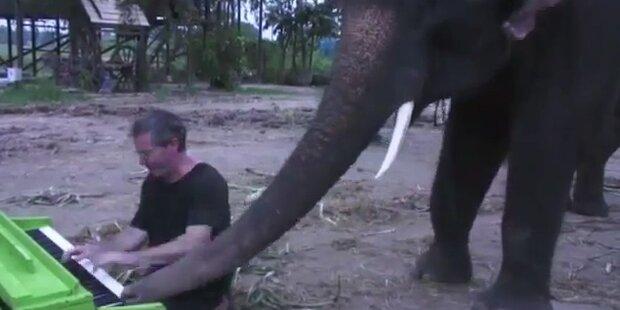Elefant spielt Duett mit Mann am Klavier