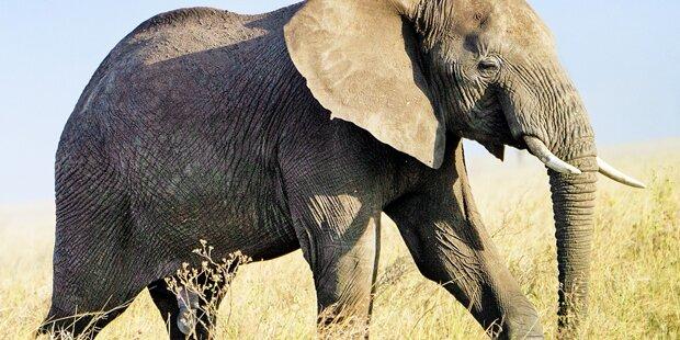 Elefant tötete Buben