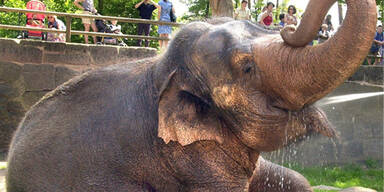Elefanten-Dame mit Hebekran gerettet