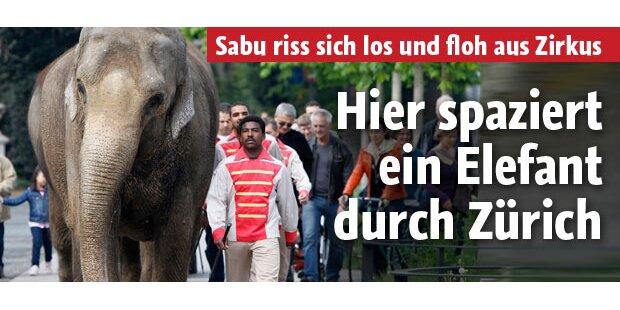 Hier spaziert ein Elefant durch Zürich