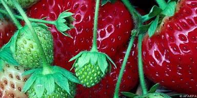 Erdbeeren sind so genannte 'Mittelstarkzehrer'