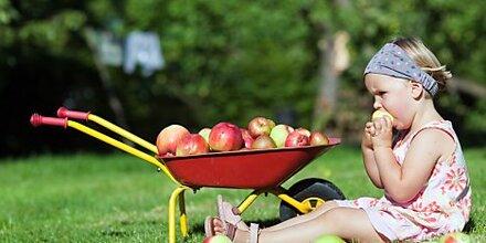 Apfel als Anti-Stress- und Anti-Aging-Obst