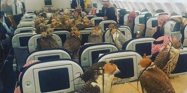 Saudi-Prinz fliegt mit 80 Falken auf Urlaub