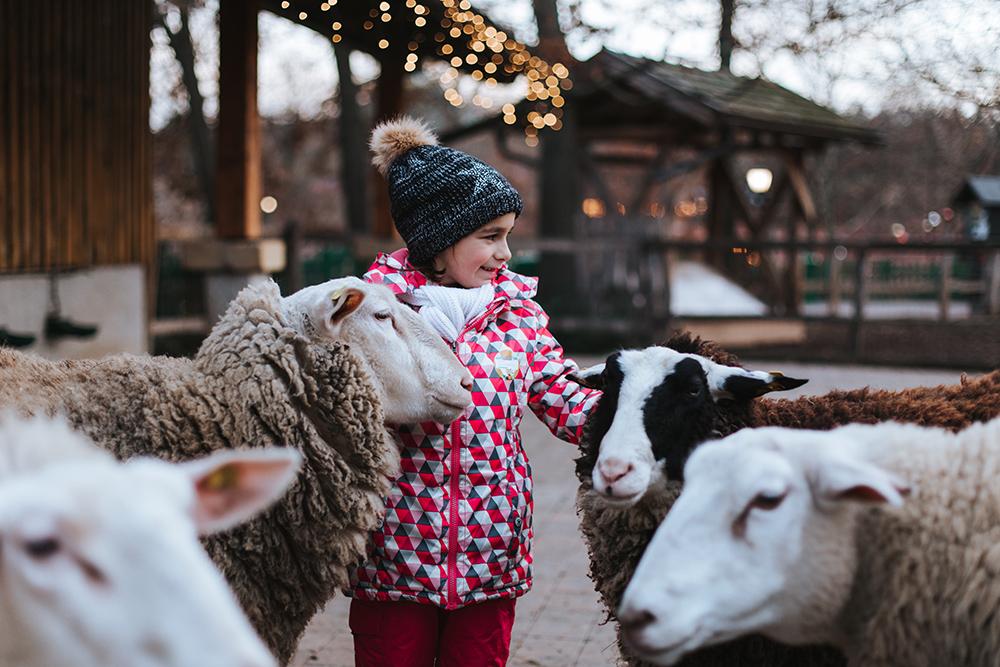 Familypark - ADV - Weihnachtszauber - Streichelzoo