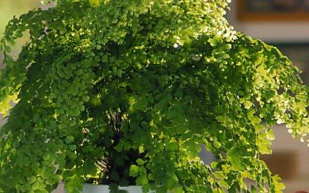 Tüpfelfarn ist die ideale Pflanze für das Bad