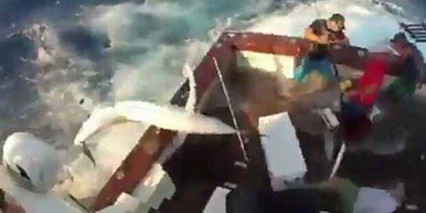 300-Kilo-Fisch attackiert Angler
