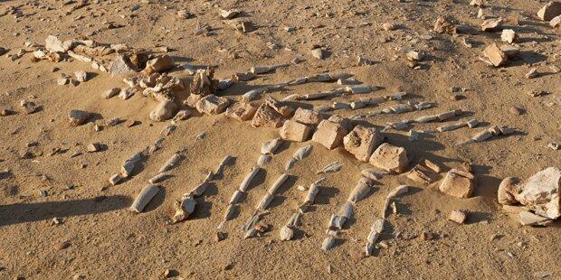 1,8 Millionen Jahre altes Wal-Fossil gefunden