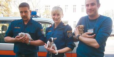 Polizei stoppt Welpen-Mafia