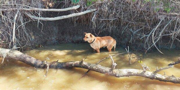 Herrl wollte Hund in Fluss ertränken