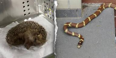Rettungseinsatz für Igel und Schlange