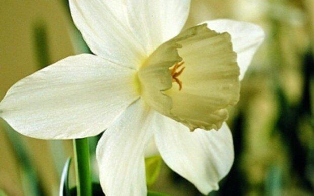 Vorgetrieben - Zwiebelblumen in Töpfen