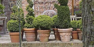 Frische Luft tut auch Kübelpflanzen gut
