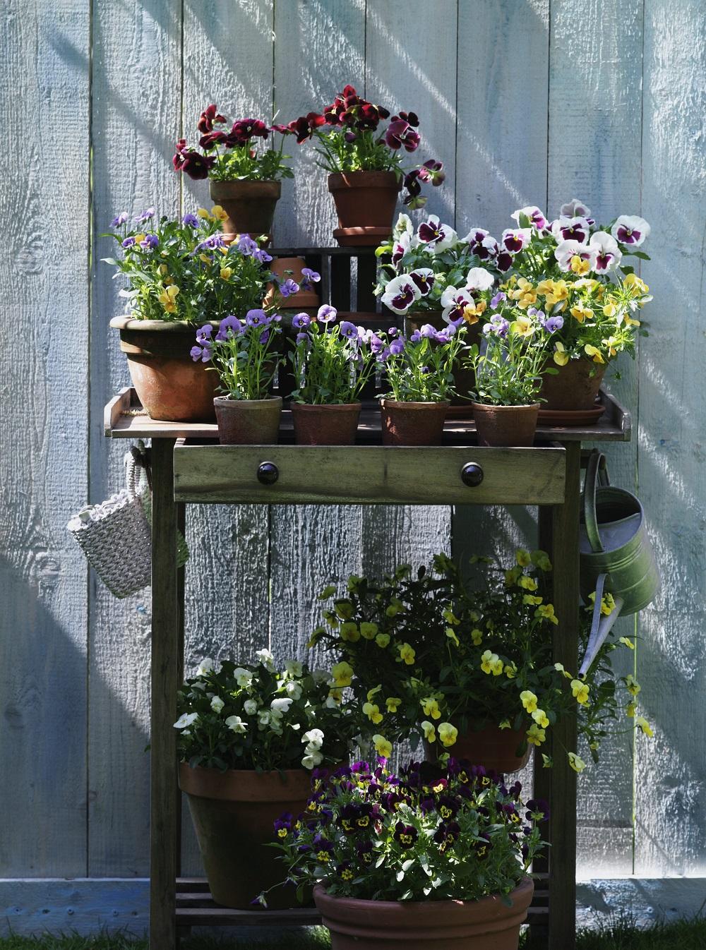 Gartensaison - Garten-CH - NaturLust #14 - Seite 29_5
