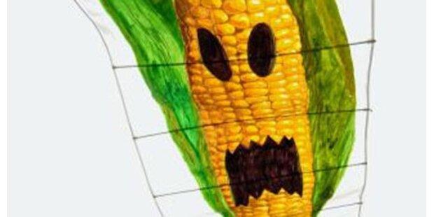 EU-Umweltrat unterstützt Genmais-Anbauverbot