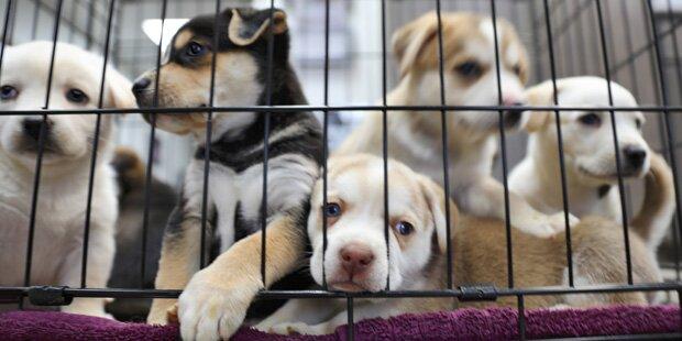 Heime dürfen ausgesetzte Tiere jetzt nicht mehr töten