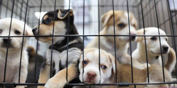 Kärntnerin hinterließ Tierschutzverein 4,5 Millionen Euro