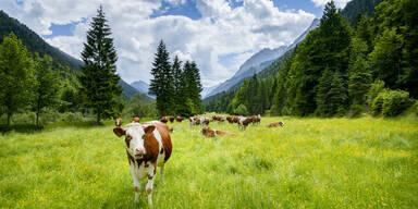 Die Top 5 Urlaubserlebnisse mit Tieren