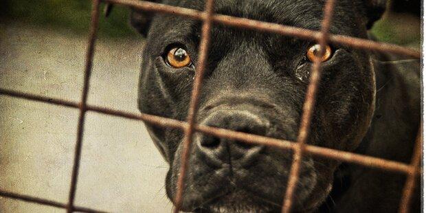 Wiener Polizisten retten Hund aus Gammel-Wohnung