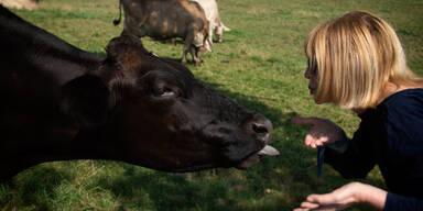 """Wirbel um """"KuhKussChallenge"""": Mit oder ohne Zunge?"""