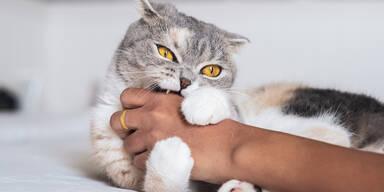 Katze beisst in Hand