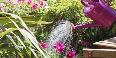 Farbenfrohe Pflanzen werden gegossen